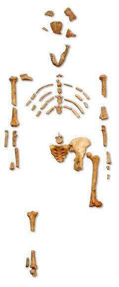Pourquoi le squelette Lucy ?