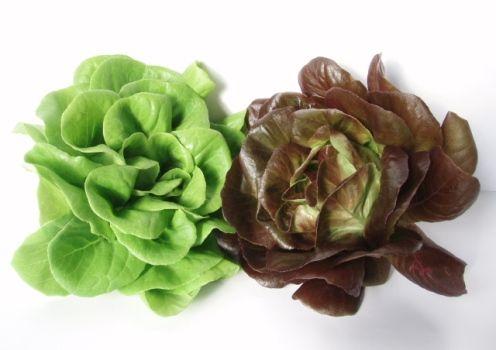 Pourquoi ne faut il pas couper la salade - Pourquoi on ne coupe pas la salade ...